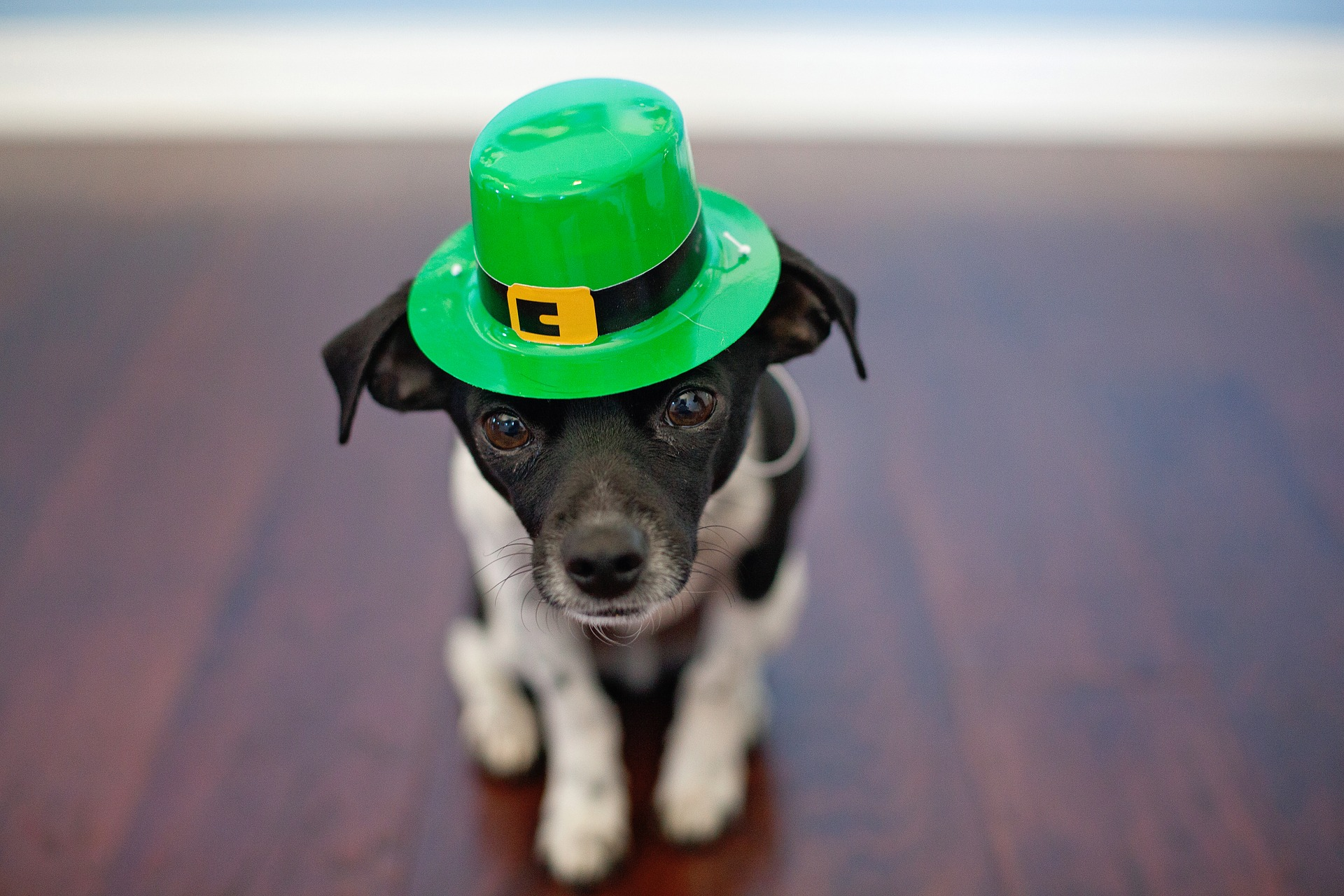 Beyond Green Beer: PR Ideas For St. Patrick's Day